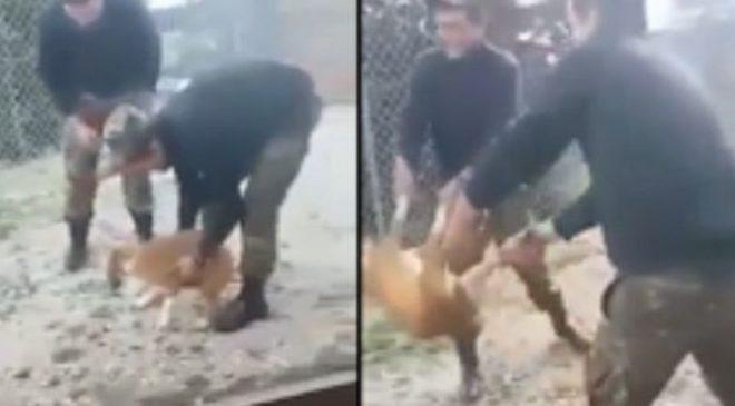 Εντονες αντιδράσεις για την κακοποίηση σκύλου από φαντάρους – Διατάχθηκε έρευνα (ΒΙΝΤΕΟ)
