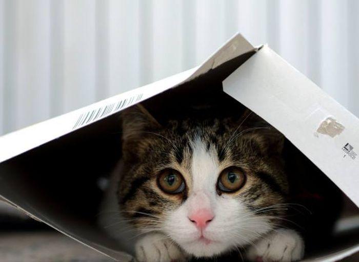 ΠΟΥ, κατοικίδια γάτες