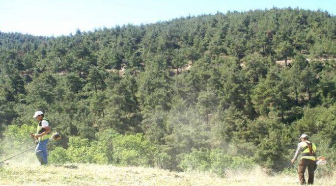 Μύκητας καταστρέφει δάση από πλατάνια στα Ιωάννινα!