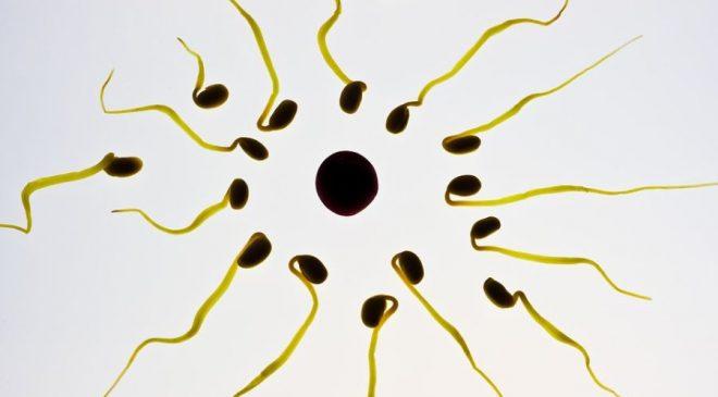 Το στενό εσώρουχο επηρεάζει την υγεία του σπέρματος