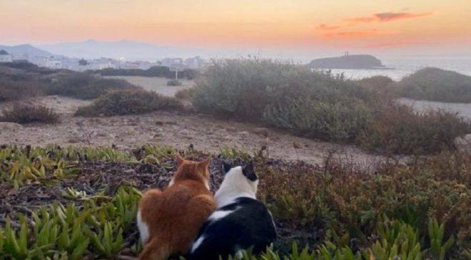 Δύο γάτες στη Νάξο απολαμβάνουν το ηλιοβασίλεμα!