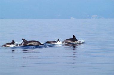 Θερμαϊκό δελφίνι Καβάλα