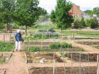 Μεγάλη η ζήτηση των λαχανόκηπων του ΑΠΘ τα τελευταία χρόνια