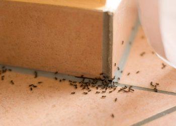 Πως να απαλλαγείτε μια και καλή από τα μυρμήγκια στο σπίτι