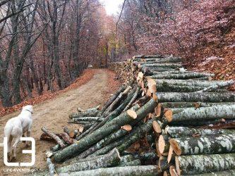 Δήμος Θέρμης: Συνεχίζονται οι εργασίες εξυγιαντικής υλοτόμησης για προστασία από το φλοιοφάγο έντομο