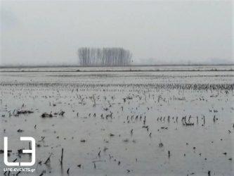 Δεν είναι λίμνη, είναι ο κάμπος στα Τενάγη Φιλίππων (ΒΙΝΤΕΟ & ΦΩΤΟ)