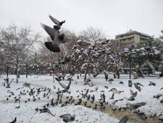 Τα γυάλινα κτήρια σκοτώνουν τα… πουλιά
