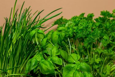 Το αρωματικό βότανο που προστατεύει από καρκίνο και διαβήτη
