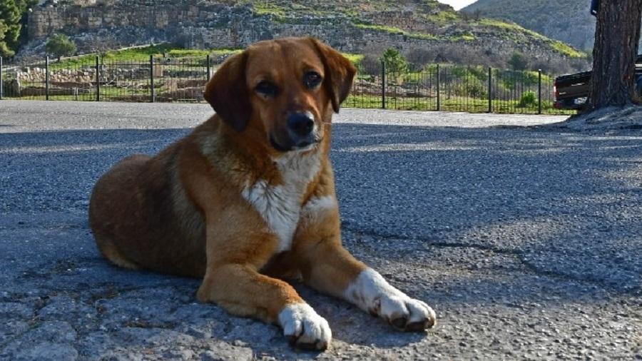κατοικίδιο σκύλος σεισμός