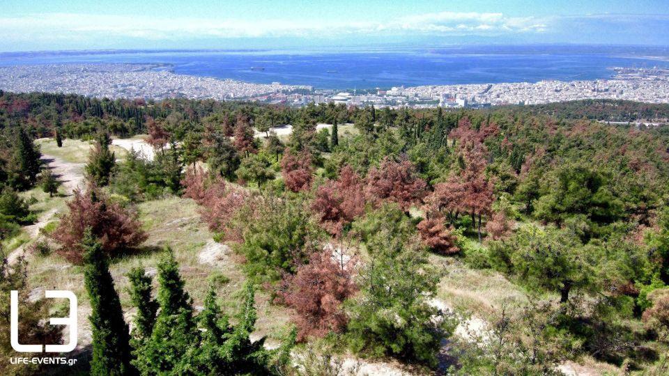 thessaloniki seix sou dentra entomo dasos Θεσσαλονίκη