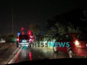 Θεσσαλονίκη: Πτώση δέντρου στα Πράσινα Φανάρια (ΦΩΤΟ)