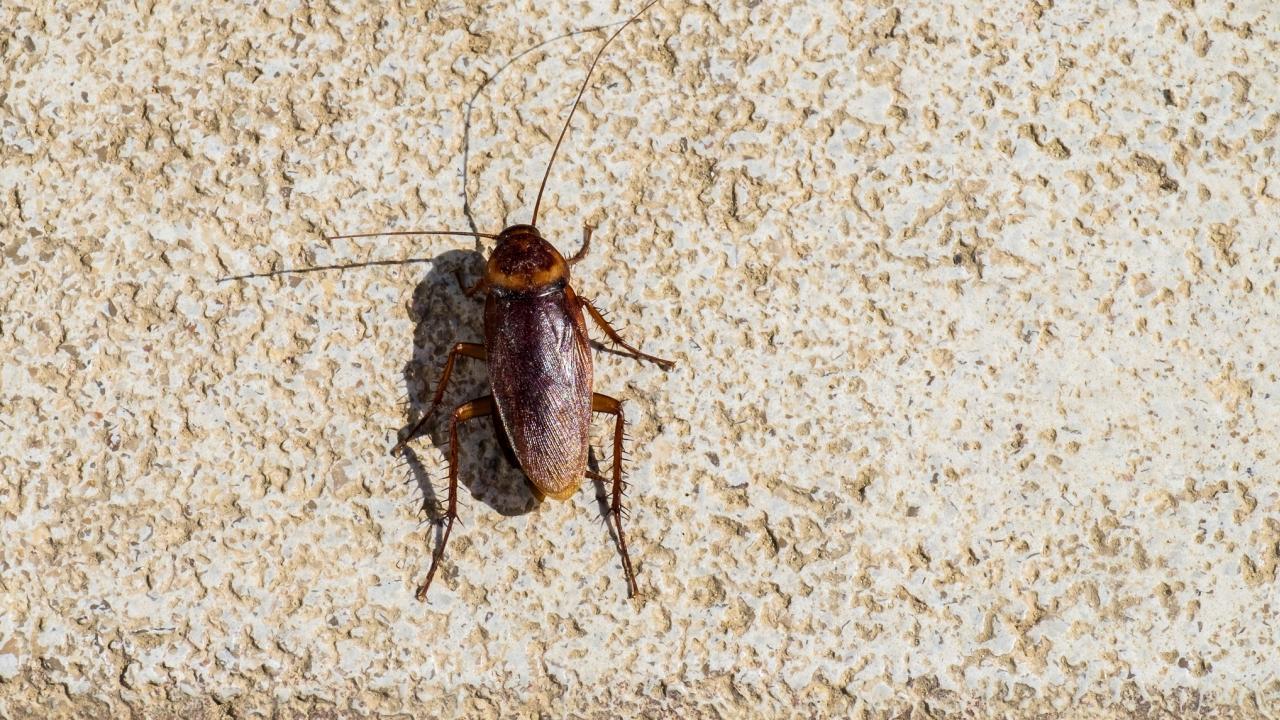 κατσαρίδες σπίτι
