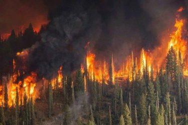 Μεγάλη πυρκαγιά καίει δασική έκταση στην Κρήτη