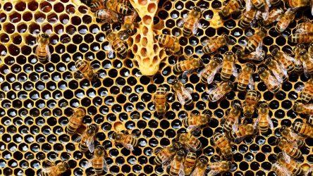 Φωτιά Εύβοια: Οι φλόγες εξαφάνισαν χιλιάδες σμήνη μελισσών