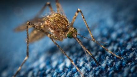 Κλιματική αλλαγή: Μπορεί να μολύνει με ελονοσία και δάγκειο πυρετό 8 δισεκατομμύρια ανθρώπους