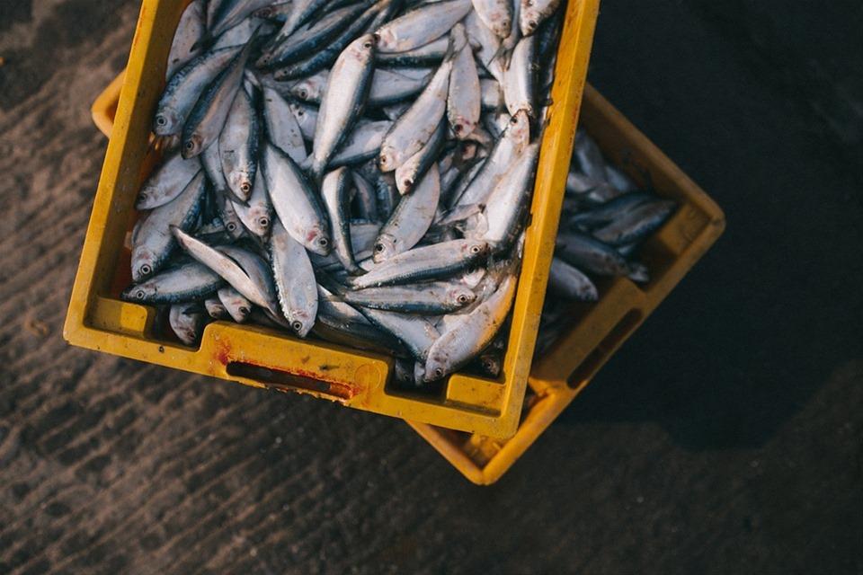 """Γονιδιακή μετάλλαξη στο DNA """"στερεί"""" από κάποιους την μυρωδιά των ψαριών"""