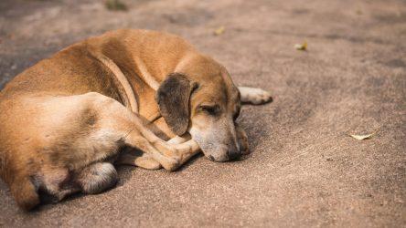Μέσω διαδικτύου οι υιοθεσίες αδέσποτων ζώων στη Νάουσα