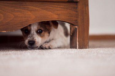 σκύλος σκύλοι φοβίες