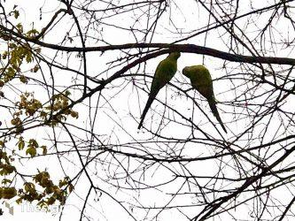 Θεσσαλονίκη: Παπαγάλοι βολτάρουν στο πάρκο Ξαρχάκου (ΒΙΝΤΕΟ & ΦΩΤΟ)