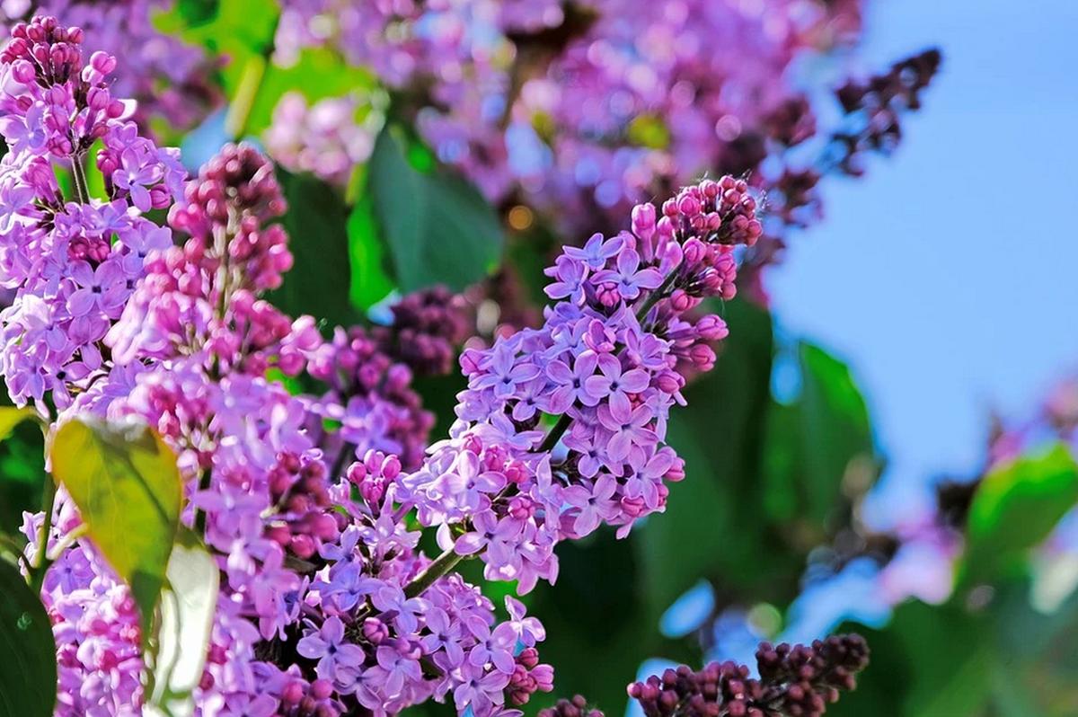 Πασχαλιά δέντρο Πάσχα Παναγία ευλογημένο άνθη χρόνια πολλά ευχές Χριστός Ανέστη