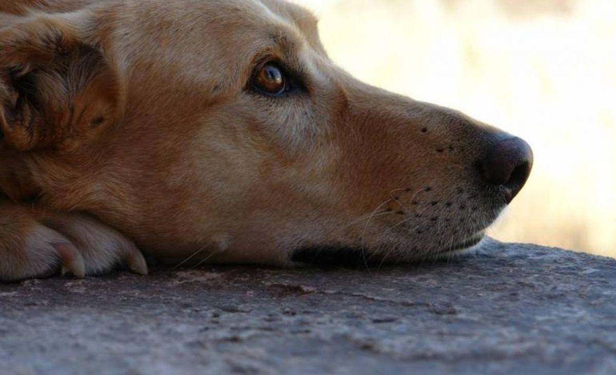αδέσποτα σκύλος Θεσσαλονίκη ΔΕΗ σκύλο