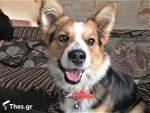 πασχαλινές λιχουδιές κατοικιδίων διατροφή Πάσχα μεζεδάκια σκύλοι σκύλος