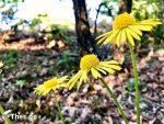 Μάης μήνας Πρωτομαγιά λουλούδι λουλούδια