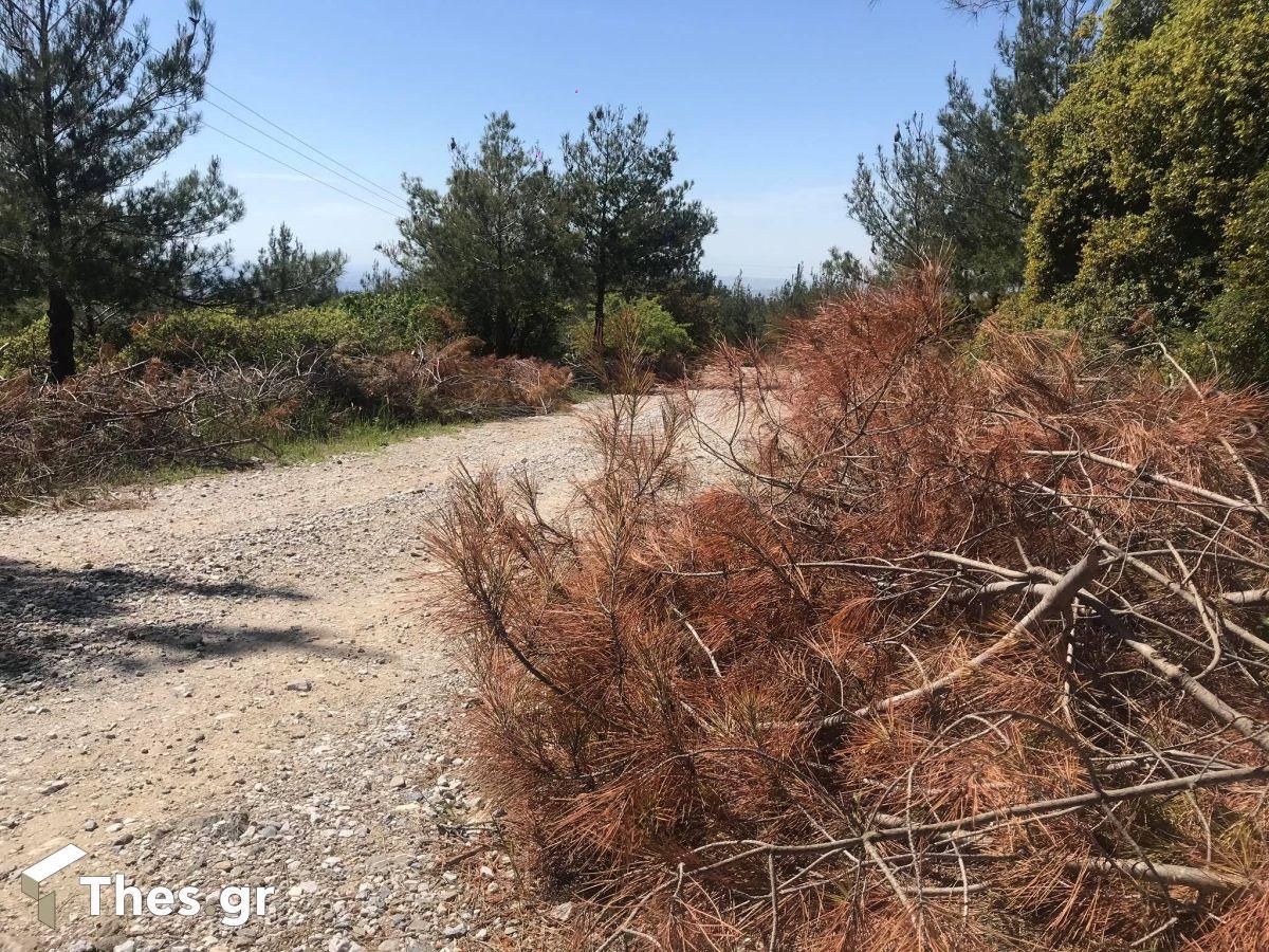 Θεσσαλονίκη δάσος Σέιχ Σου ξερά κλαδιά πυρκαγιά φωτιά