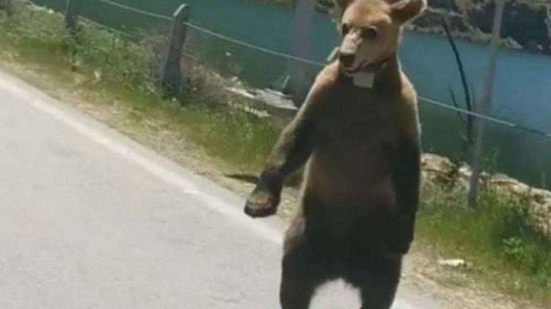 Πήγε βόλτα με το άλογο και τους κυνήγησε αρκούδα στην Πτολεμαΐδα