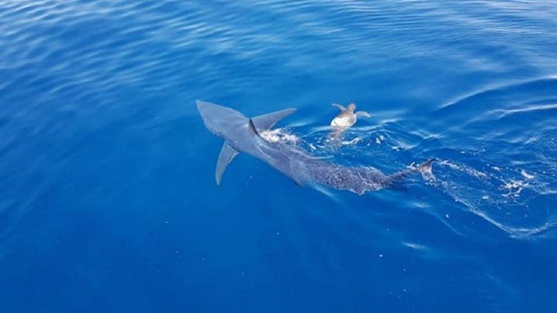Νεκρός 17χρονος από επίθεση καρχαρία