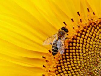 Ο ρόλος της μέλισσας στη ζωή μας