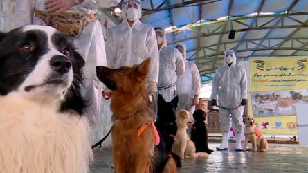 Σκύλοι εκπαιδεύονται να εντοπίζουν τον κορονοϊό!