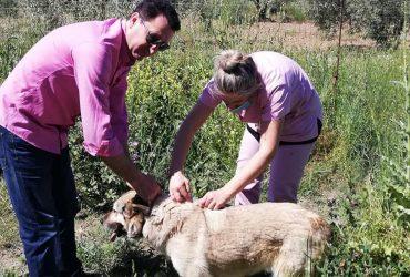 Εμβολιασμός αδέσποτων ζώων από τον ΣΥΠΠΑΖΑΘ