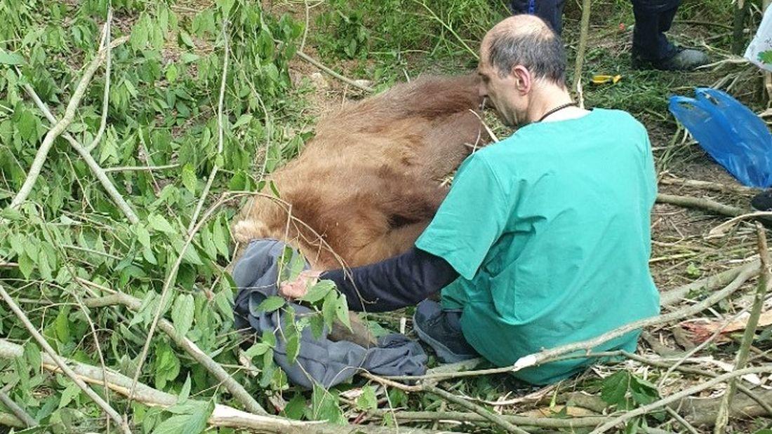 Κοζάνη: Αρκούδα πιάστηκε σε παγίδα για αγριογούρουνα (ΒΙΝΤΕΟ)
