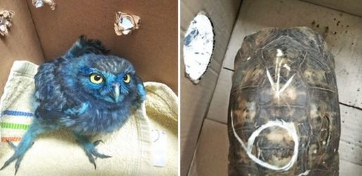 Εβαψαν και κακοποίησαν κουκουβάγια και χελώνα (ΦΩΤΟ)