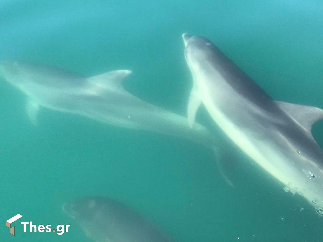 βόλτα με τα ρινοδέλφινα στον Αμβρακικό