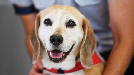 Θεσσαλονίκη: Εστιατόριο σερβίρει σούσι για σκύλους
