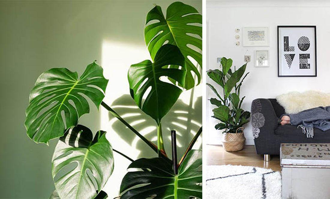 Τα πέντε… στυλάτα φυτά που θα διακοσμήσουν διαφορετικά το σπίτι σας (ΦΩΤΟ)