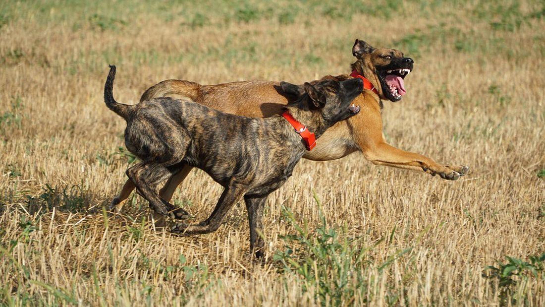 Τρίκαλα σκύλος Θεσσαλονίκη
