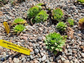 Δήμος Θέρμης: Πάρκο με 1.000 φυτά από 70 είδη θα φιλοξενεί η Καρδία