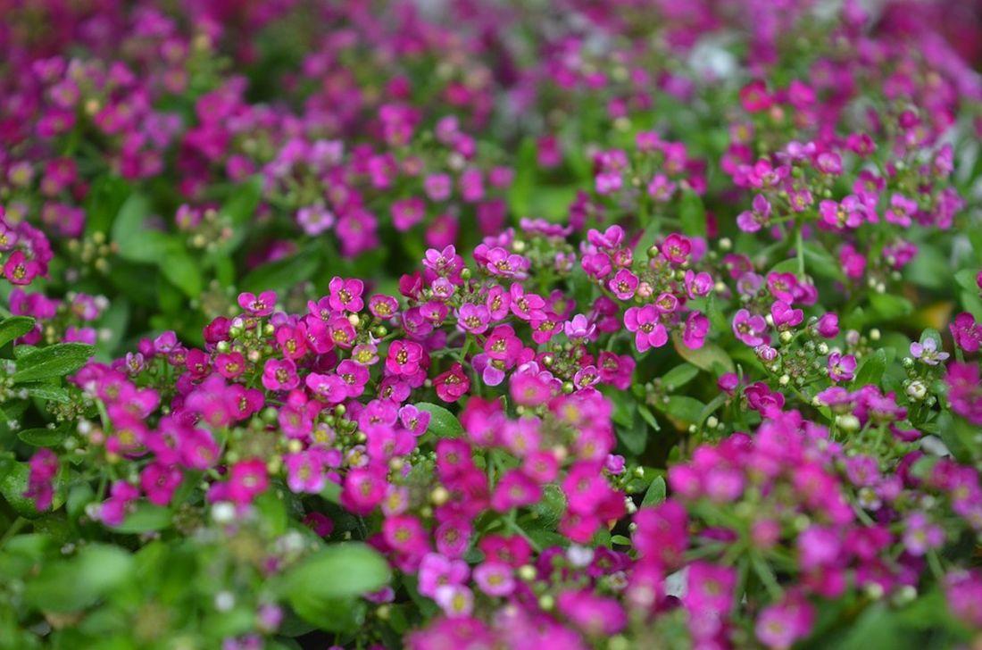 φθινόπωρο λουλούδια αλυσσο