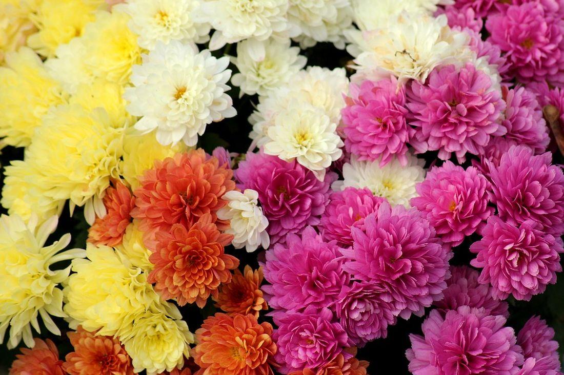 φθινόπωρο λουλούδια