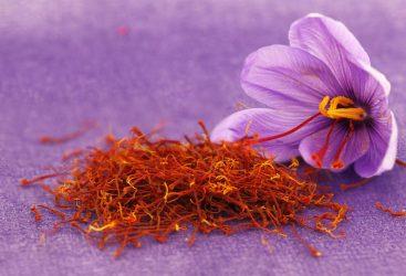 Με… κορονοϊό ξεκίνησε η συλλογή του λουλουδιού κρόκος
