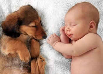 κατοικίδια και μωρά