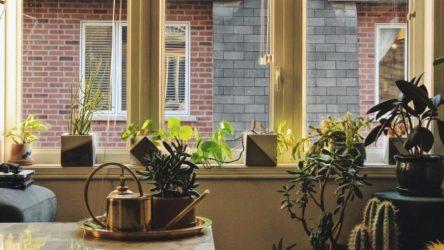 4 φυτά εσωτερικού χώρου για να ομορφύνετε το σπίτι σας