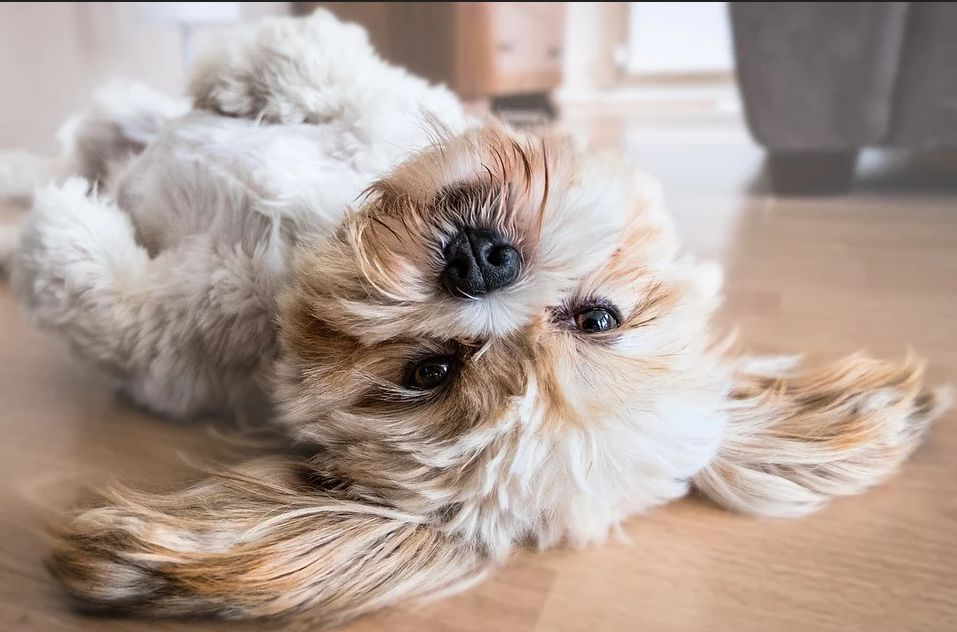 πως να περιποιηθείτε τον σκύλο στο σπίτι