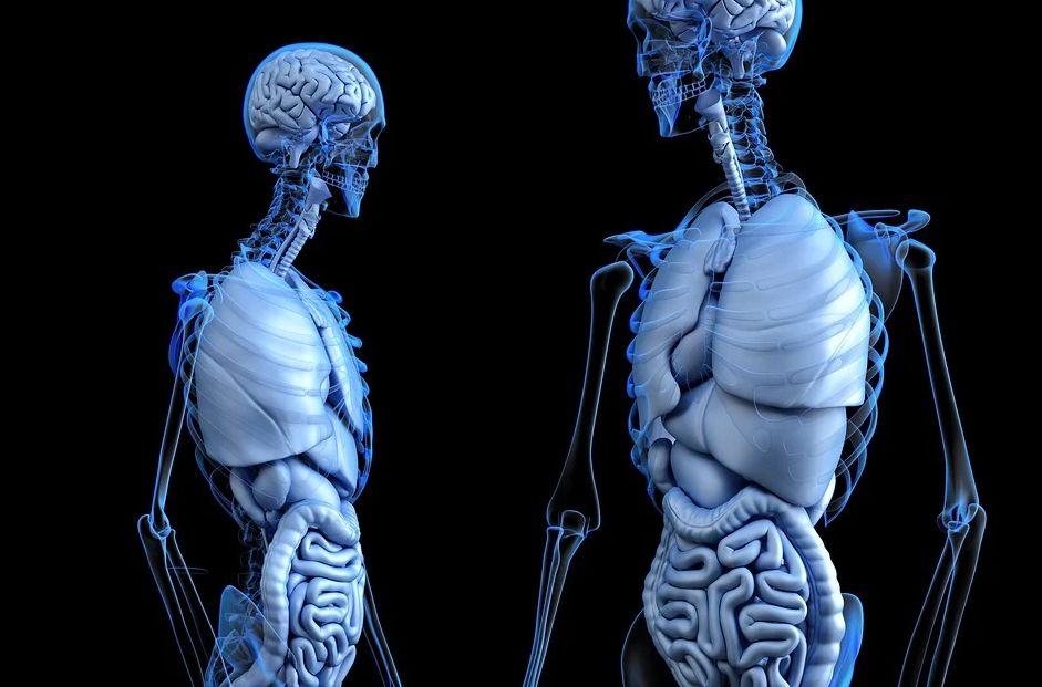 σώμα οργανισμός