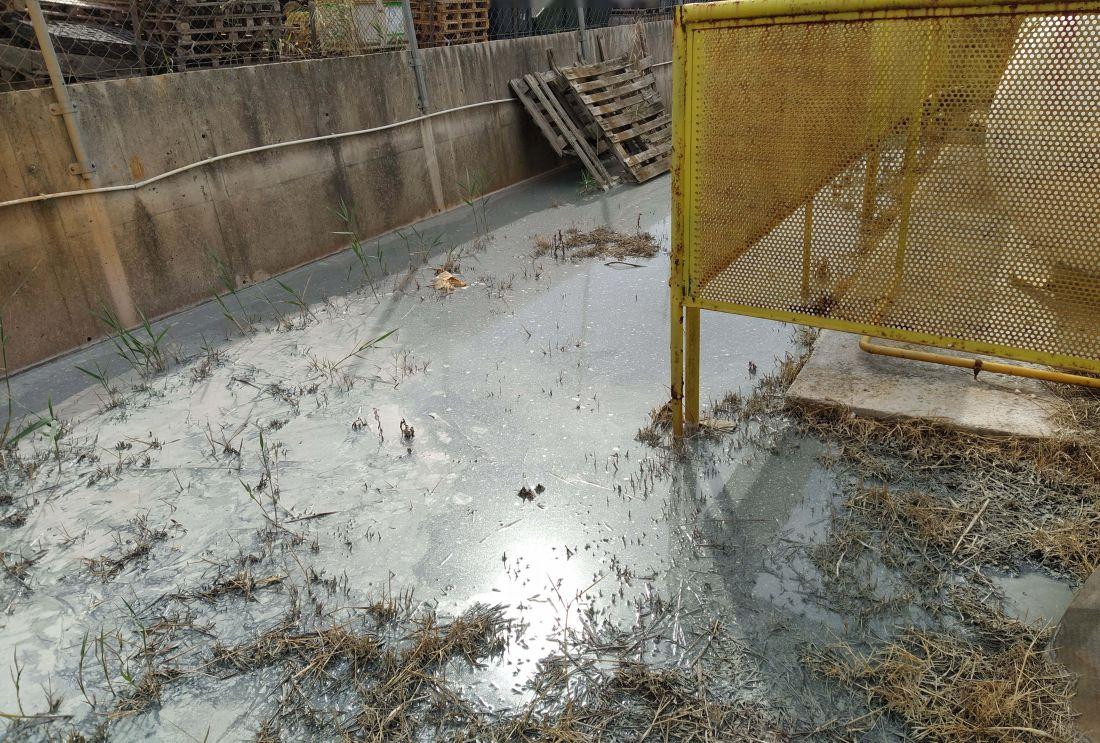 Θεσσαλονίκη: Ρύπανση του περιβάλλοντος από βυρσεδεψίο που είχε σφραγιστεί (ΦΩΤΟ), φωτογραφία-1