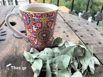 ευκάλυπτο ευκάλυπτος φύλλα αιθέριο έλαιο κρυολόγημα γρίπη