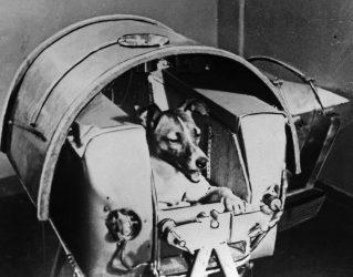 """Τα ζώα που έχουν """"ταξιδέψει"""" στο διάστημα"""